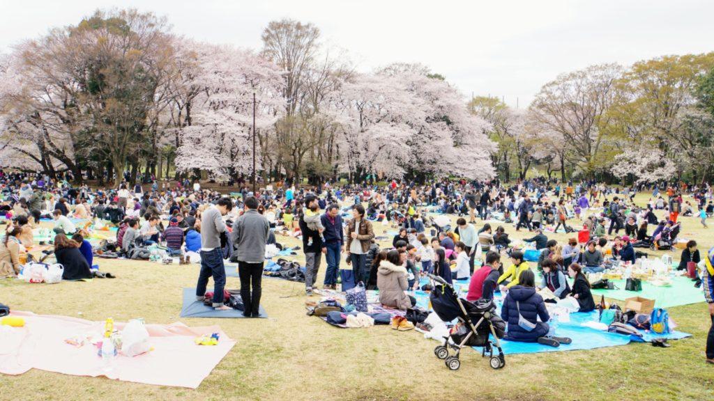 Parkerna fulla av människor under sakura-säsongen