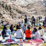 Hanami-picnic under träden i Tokyo